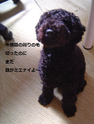 DSC02977_2.jpg