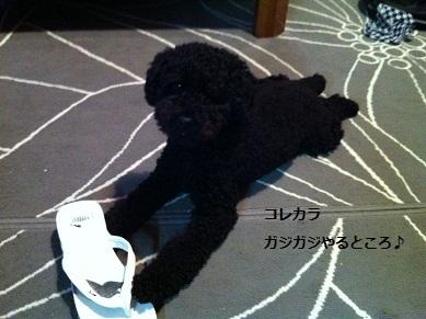 IMG_gajigaji.jpg