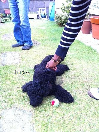 goron_20111115182413.jpg