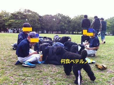 ohanami_4.jpg