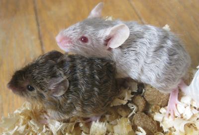 mouse-teddy.jpg