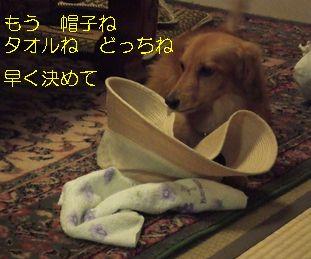 2008_0813ゆかた0007 タオル