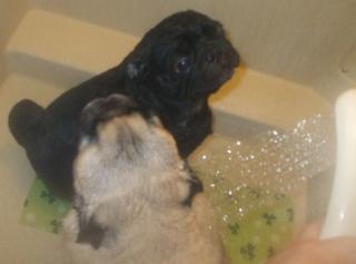 シャワー大好きです