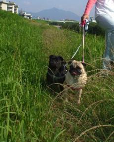 草むら散策
