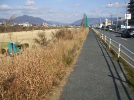 川べりの道