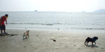 海とかけB