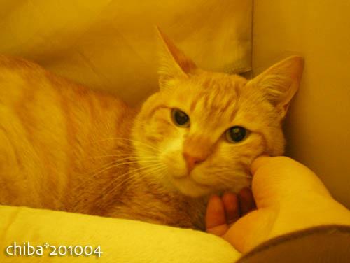 chiba10-04-04.jpg