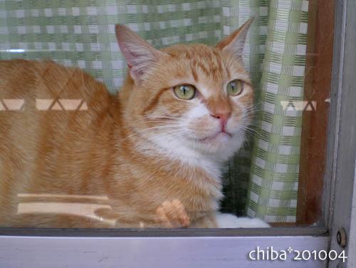 chiba10-04-108.jpg