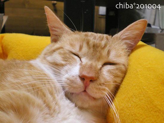 chiba10-04-120x.jpg