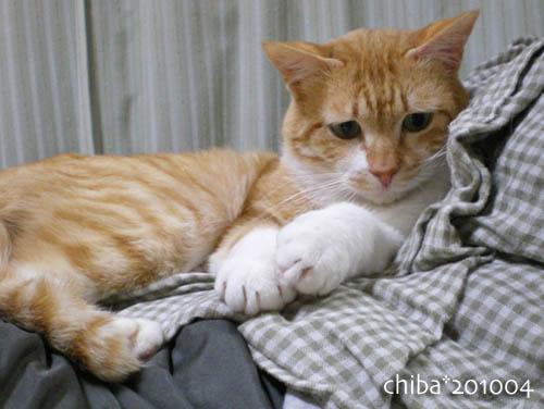 chiba10-04-138.jpg