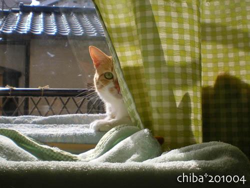 chiba10-04-176.jpg