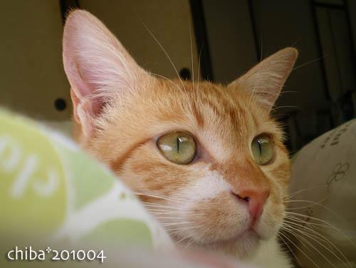 chiba10-04-180.jpg
