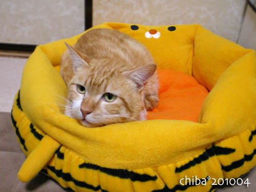 chiba10-04-20.jpg