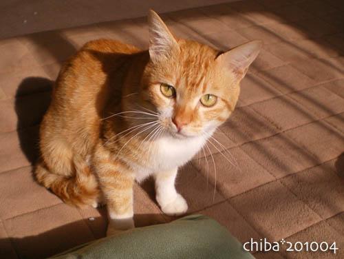 chiba10-04-71.jpg