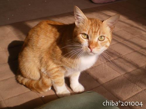 chiba10-04-72.jpg