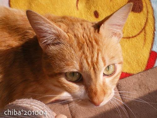 chiba10-04-86.jpg