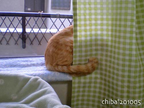 chiba10-05-04.jpg