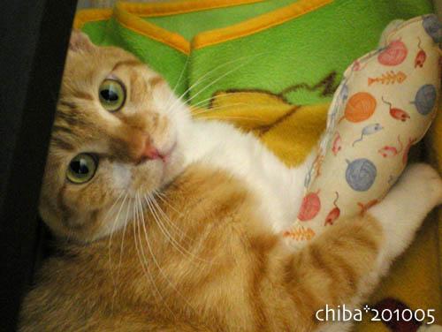 chiba10-05-105.jpg