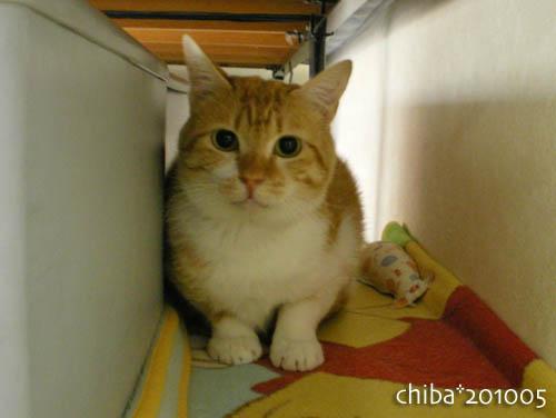 chiba10-05-116.jpg