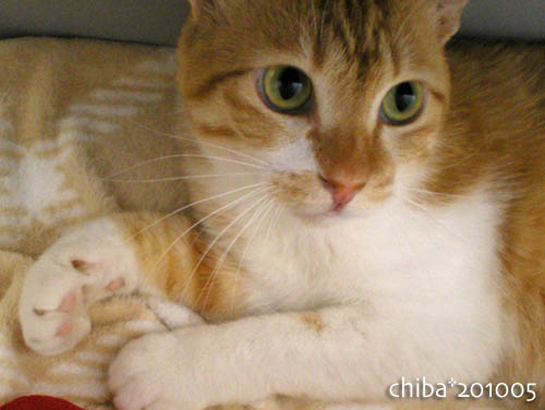chiba10-05-145.jpg