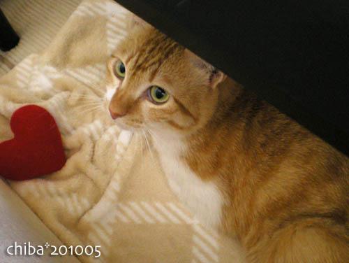 chiba10-05-152.jpg