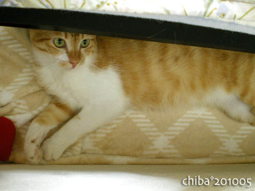 chiba10-05-166.jpg