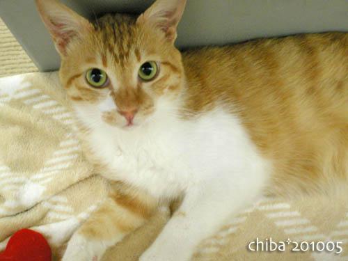 chiba10-05-174.jpg