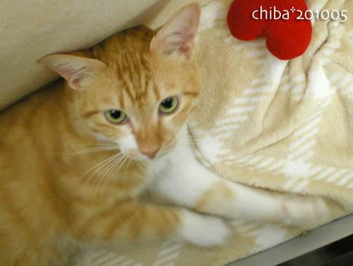 chiba10-05-176.jpg