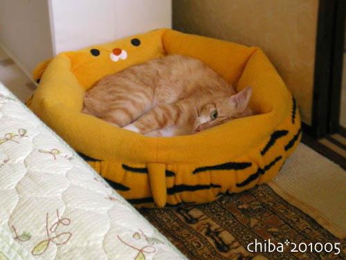 chiba10-05-181.jpg