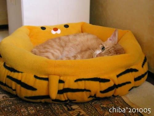 chiba10-05-182.jpg