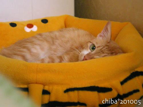 chiba10-05-183.jpg