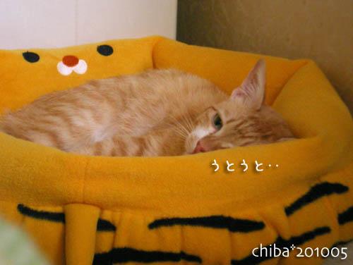 chiba10-05-185.jpg