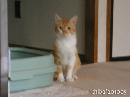 chiba10-05-195.jpg