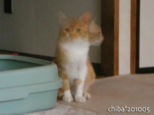 chiba10-05-196.jpg