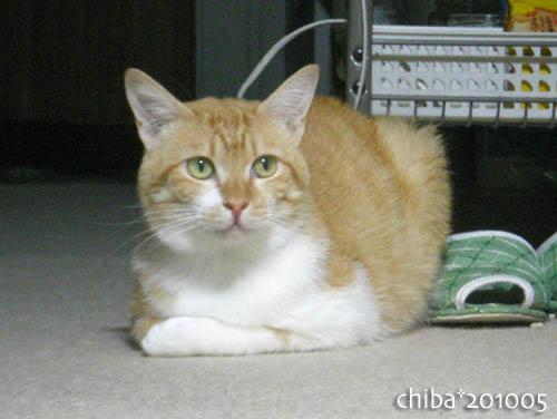 chiba10-05-214.jpg