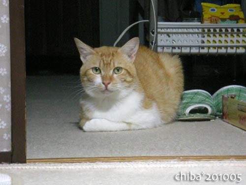 chiba10-05-215.jpg