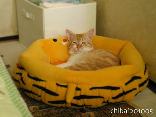 chiba10-05-233.jpg