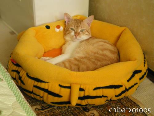 chiba10-05-236.jpg