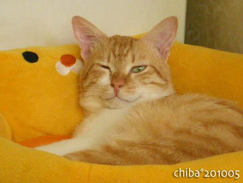 chiba10-05-237.jpg