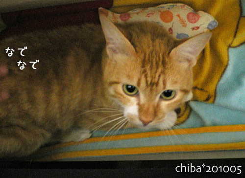 chiba10-05-86.jpg