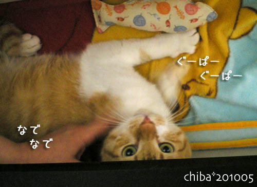 chiba10-05-88.jpg