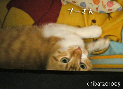 chiba10-05-91.jpg