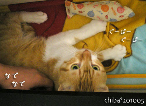 chiba10-05-92.jpg