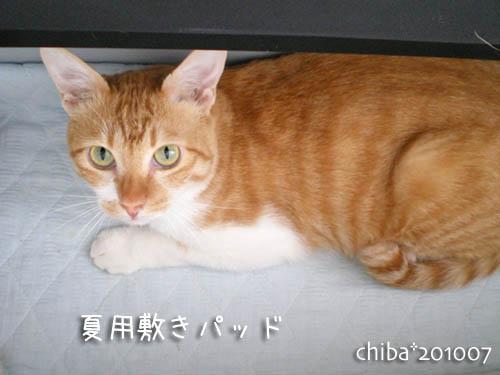 chiba10-07-127.jpg