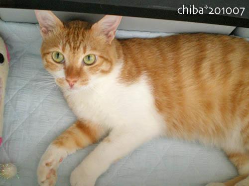 chiba10-07-130.jpg