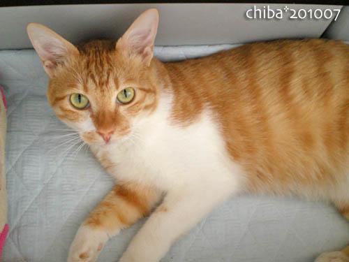 chiba10-07-131x.jpg