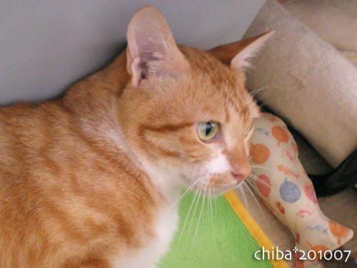 chiba10-07-141.jpg