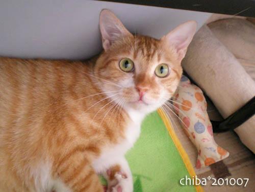 chiba10-07-50.jpg
