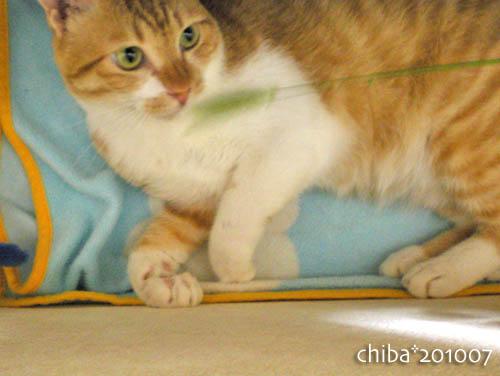 chiba10-07-52.jpg
