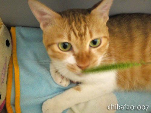 chiba10-07-56.jpg